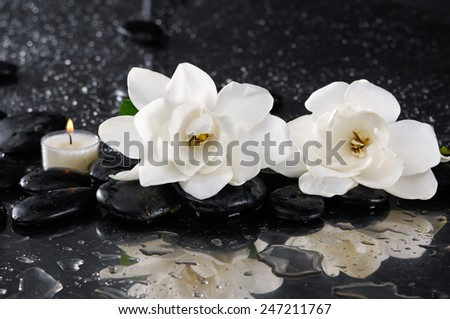 two gardenia with candle on black pebbles  - stock photo