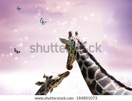 Two Giraffes, mother and child in friendship or love theme image at twilight  - stock photo