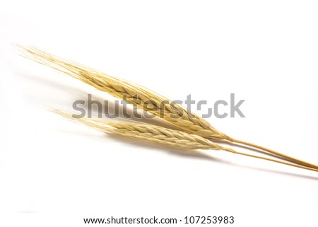 Two golden barley on white background - stock photo