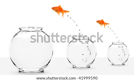two goldfish jumping to bigger fishbowls isolated on white - stock photo