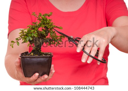Two hands are holding a bonsai scissors and cutting a tree - stock photo