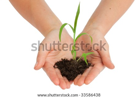two hands are holding a young plant - stock photo