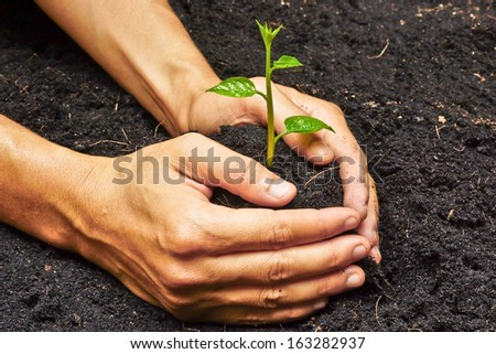 two hands holding and caring a young green plant / planting tree / growing a tree / love nature / save the world - stock photo