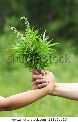 Two hands holding fresh cannabis bouquet - stock photo