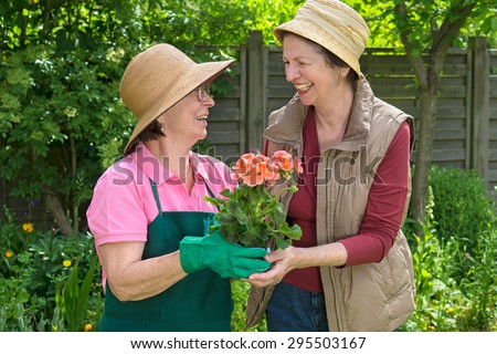 Two happy senior ladies gardening together laughing and chatting over a colorful potted flower in a lush spring garden - stock photo