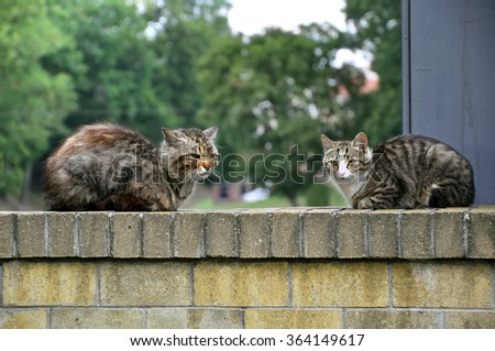Two homeless gray cats sitting on the concrete fence. - stock photo