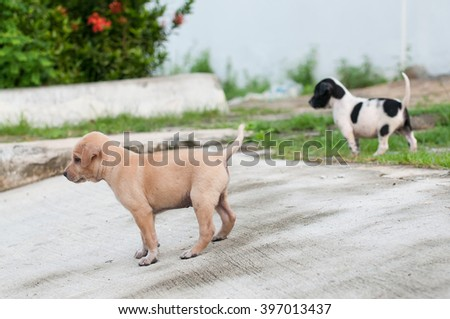 Two Homeless Puppy dog alone on the street with friends. - stock photo