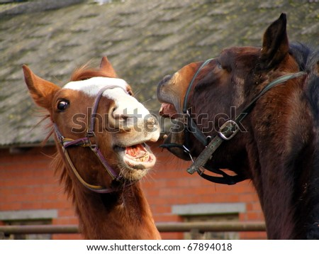 Two horse fighting and playing - stock photo
