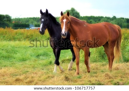 Two horses - stock photo