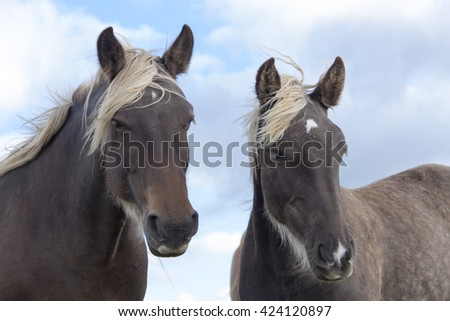 Two horses looking curiously under a cloudy sky - stock photo
