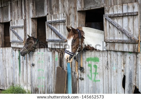 Two horses looking outside of the stable. - stock photo