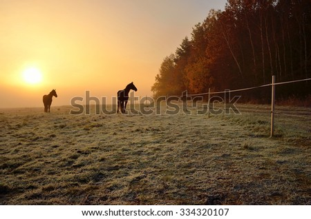 Two horses near by forest during wonderful misty sunrise in november - stock photo