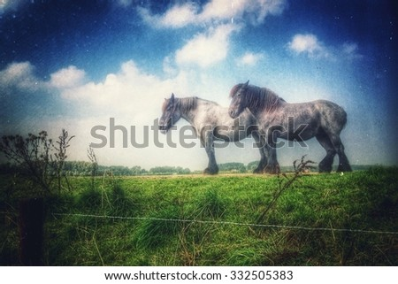 Two horses on a dike - stock photo
