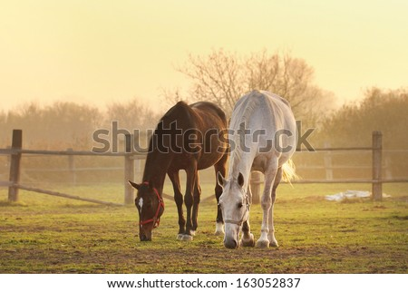 two horses on ranch - stock photo