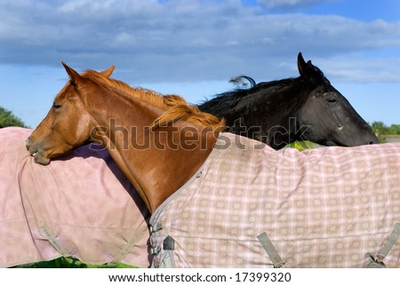 Two horses on the pasture - stock photo