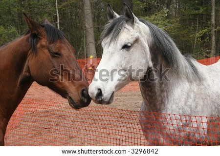 Two horses rubbing noses. - stock photo