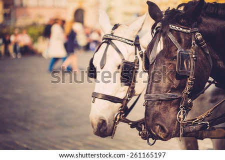 Two Horses - White And Black - Are Harnessed To A Cart For Driving Tourists In Prague Old Town Square. Toned Instant Image Filtered Photo - stock photo