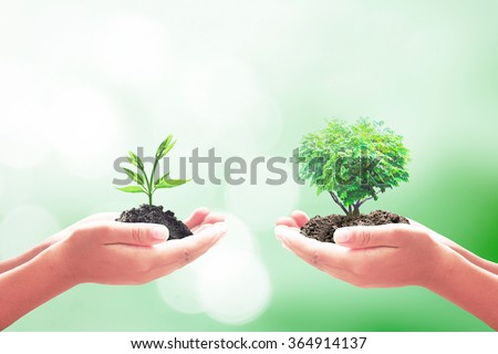 Two human hand holding small plant and green tree. Ecology World Environment Day Alternative Learning CSR Go Green Spring Time Swap Team Sell Trust Vend Deal Idea Food Farm Deal Soil Barter concept - stock photo