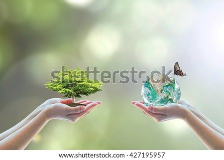 Two human hand planting perfect growing tree earth on natural background greenery Arbor reforestation conservation csr esg peace campaign World environment day Element of this image furnished by NASA - stock photo