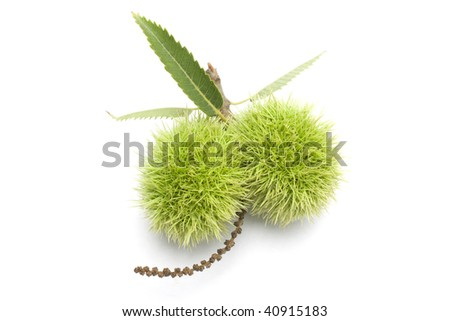 two isolated chestnut bur in white background - stock photo