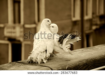 Two kissing pigeons on bridge railing in Venice (Italy). A view from Accademia bridge. Romantic vacation background. Aged photo. Sepia. - stock photo