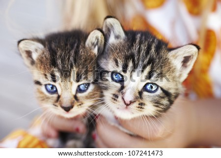 Two kittens held by person - stock photo