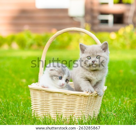 two kittens in basket on green grass - stock photo