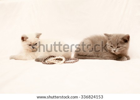 Two kittens looking at pearls on white background  - stock photo