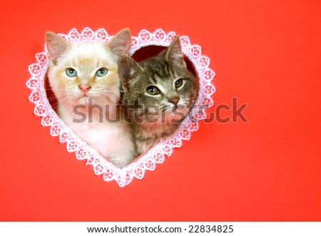 Two kittens peek out of a heart shaped hole cut into a red background for use as valentines day art - stock photo