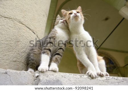 Two kittens sitting together and leaning on each other as friends - stock photo