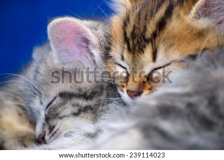 Two kittens sleeping on each other - stock photo