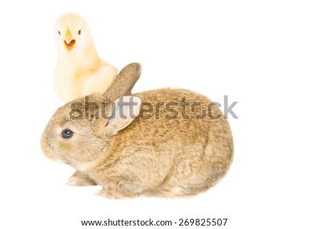 Two little fun animals - stock photo