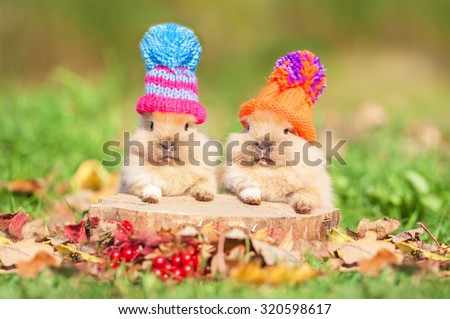 Two little funny rabbits dressed in woolen knitted hats in autumn  - stock photo