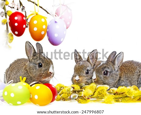 two little rabbits and spring flowering branch - stock photo