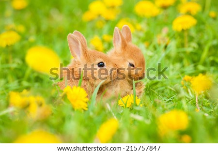 Two little rabbits sitting in flowers outdoors - stock photo