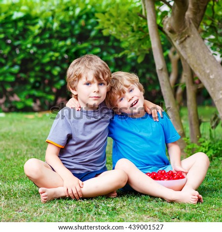 Two little sibling boys, twins having fun with picking and eating cherries in domestic garden on warm summer day, outdoors. Healthy snack for children in summer. Kids helping with gardening - stock photo