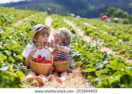 Two little sibling kid boys having fun on strawberry farm in summer. Children eating healthy organic food, fresh berries. - stock photo