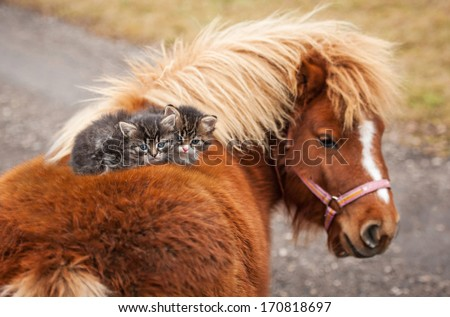 Two little tabby kittens sitting on the pony's back - stock photo