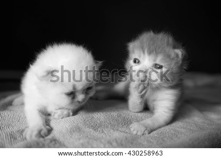 Two lovely kittens on black background in black and white photography - stock photo