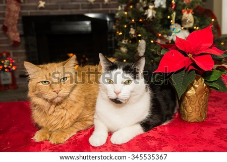 Two Loving Cats waiting for Santa - stock photo