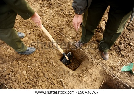 Two man planting a tree in a hole - stock photo