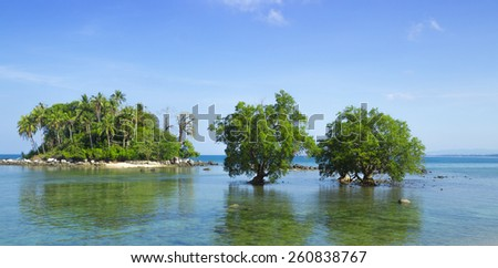 Two mangrove in the area of low tide. Southeast Asia - stock photo