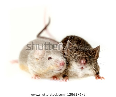 two mice - stock photo