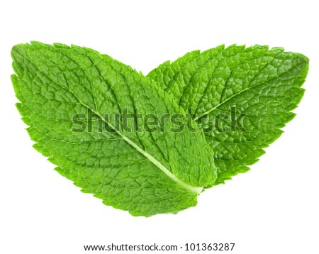 Two mint leaves - stock photo