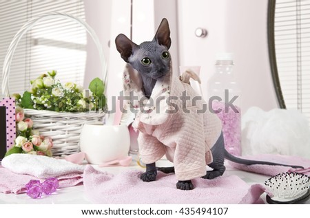 Two months old purebred Don Sphinx kitty cat dressed in pajama sitting on the table with some toiletries indoors - stock photo