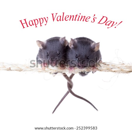 Two mouse on a rope with intertwined tails. Isolated on white background - stock photo