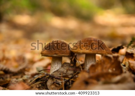 two mushrooms in yellow foliage in the fall, against the wood. Blur image as a card or a background - stock photo