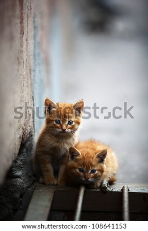 Two orange kitten outdoor - stock photo