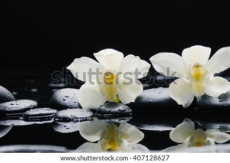 Two orchid blossom with black on wet background - stock photo