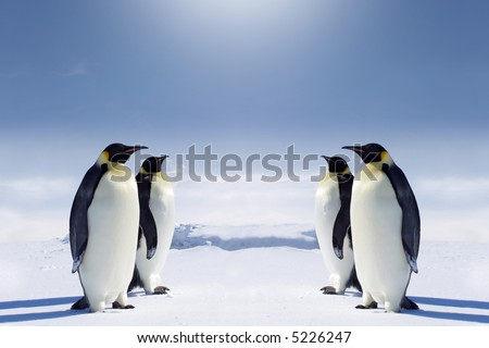 Two pairs of penguins facing each other at the South pole. - stock photo